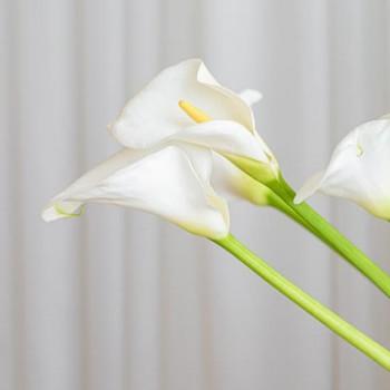 Gala Çiçeği
