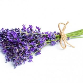 Lavanta Çiçeği Bakımı