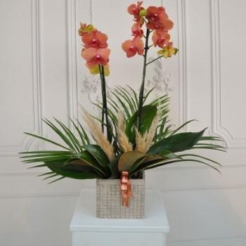 Orkide Çiçeği Bakımı