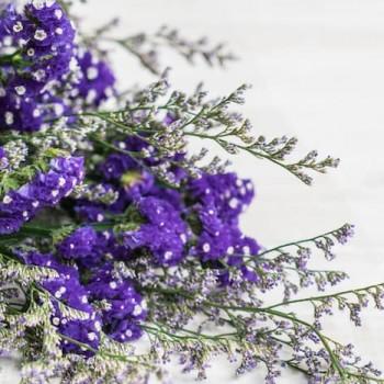 Statis Çiçeği