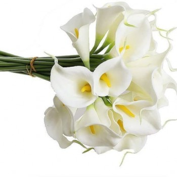 Yaz Kış Kurumayan Saksı Çiçekleri