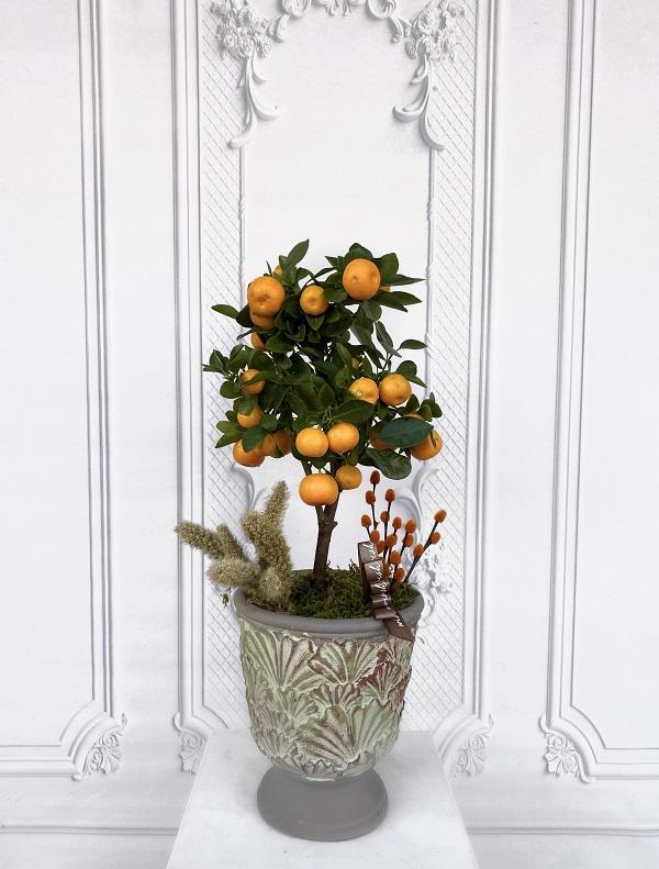 Mini Mandalina Ağacı