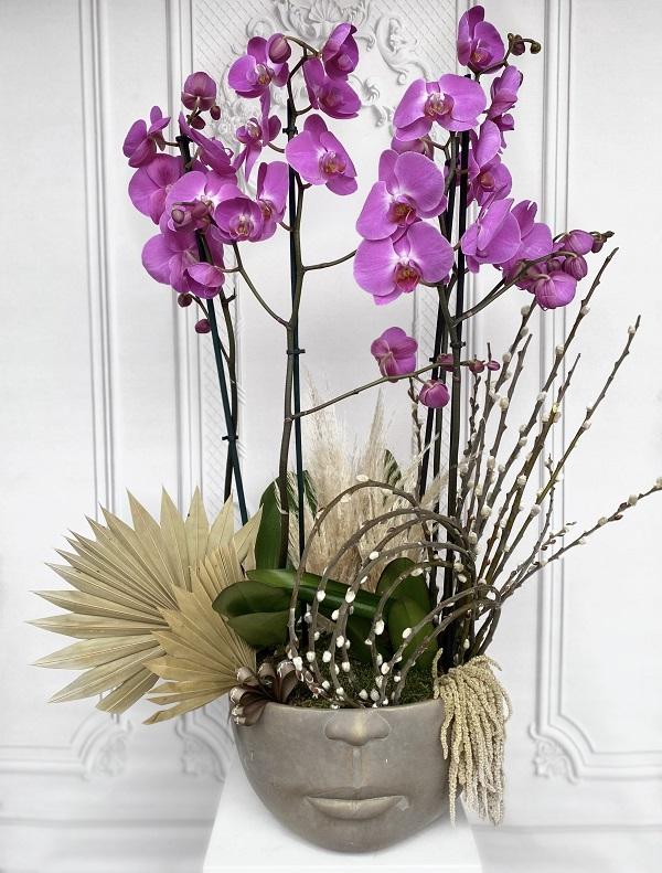 Fuşya Orkide Bahçesi