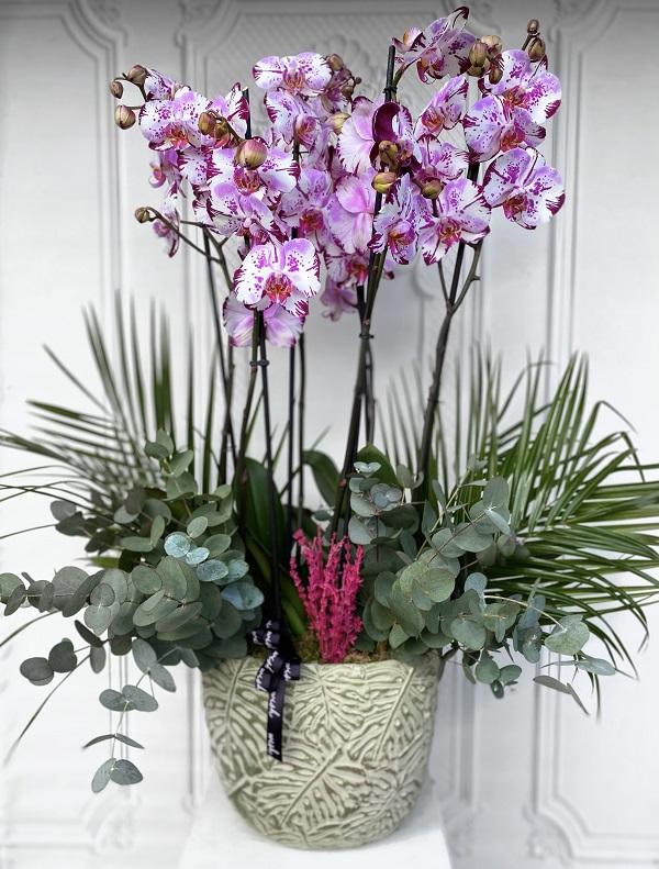 Magic Art Orkide Bahçesi